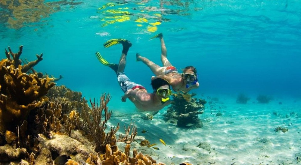 Diving and snorkeling on the house reef