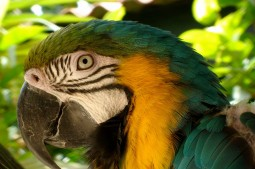 Sunny our parrot - General Impression Sun Reef