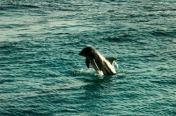 Dolphins in front of Sun Reef - General Impression Sun Reef