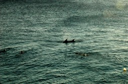Swimming with dolphins in front of Sun Reef - Sun Reef Eindruck